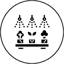 水耕栽培 / Hydroponic